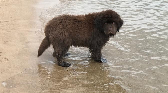Winn's first beach day