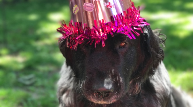Annie turns 11!