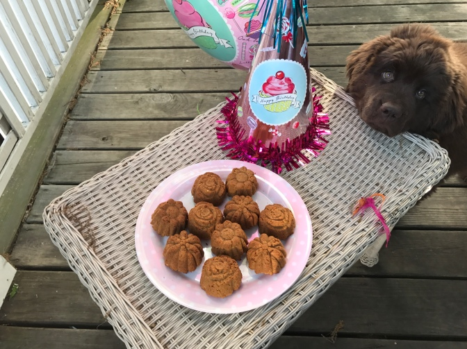 Annie's birthday pupcakes