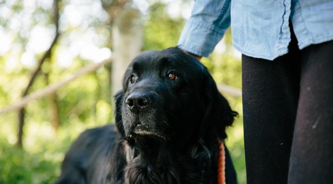 Adopt A Senior Pet Month