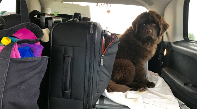 Winn's fist road trip (in pictures)