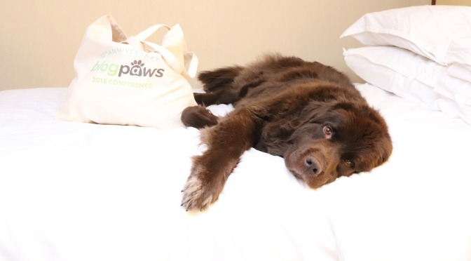 BlogPaws with Maisie