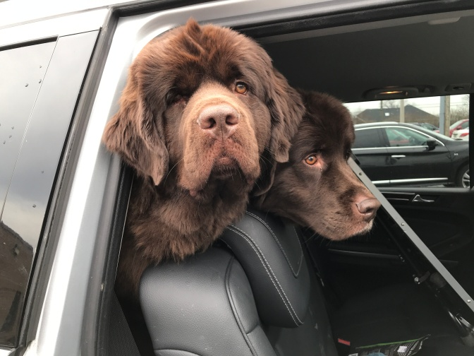 Getting road trip ready