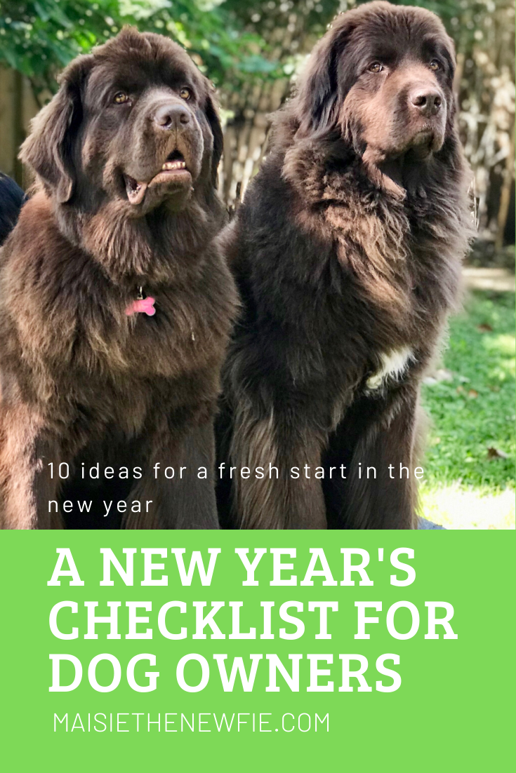 A New Year's checklist for dog owners