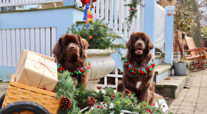 2019 Holiday Gift Guide for dog lovers