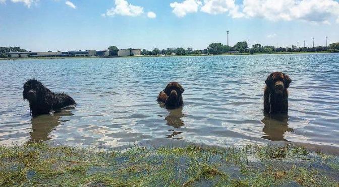 Summer fun in the water